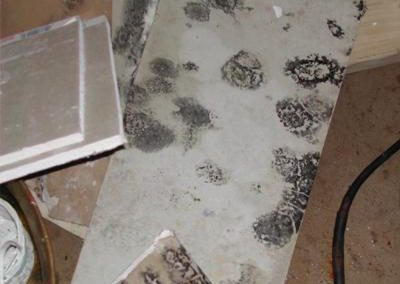 Home Mold Removal Myrtle Beach | Black Mold Treatment